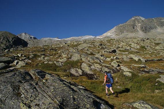 Auf den freien Almwiesen, links im Bild die Kordonspitze