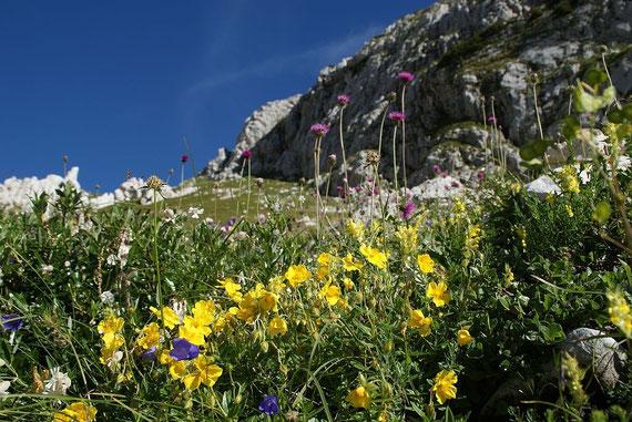 Beim Anstieg zum Sella Bila Pec; hier befindet sich übrigens ein Blumenthemenpfad