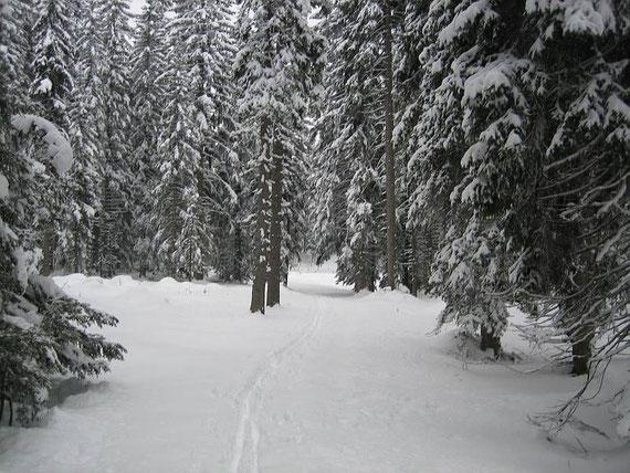 Im kuppierten Gelände beim Alpengarten