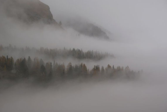 Zwischen den Nebel