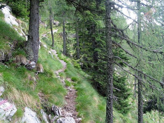 Aufstieg in der steilen Süd- bzw. Südwestflanke