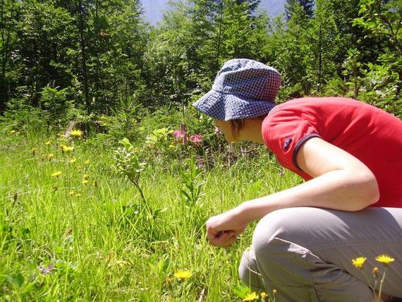 Blumenpracht am Weg zurück zum Weißenfelser See