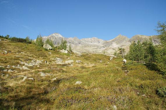 Das Ziel (ganz links) von der Waldgrenze aus aufgenommen