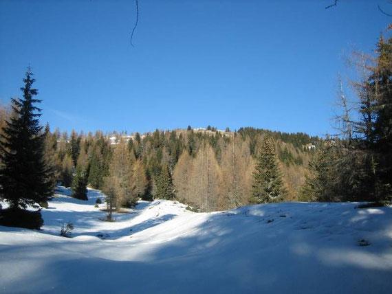 Langsam wird es flacher und der Wald lichter, im Hintergrund erkennt man bereits den Gipfel