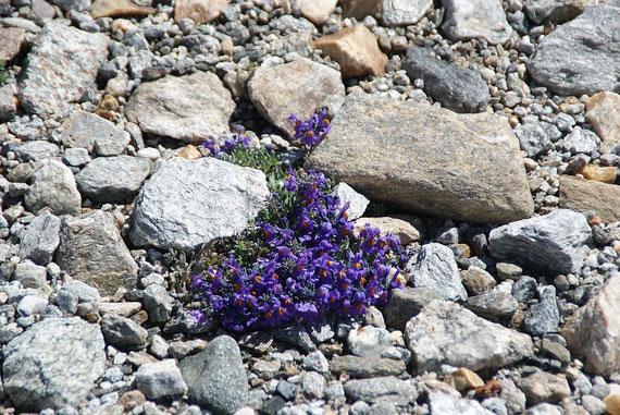 Auch in der zerstörten Natur finden sich noch kleine Wunder