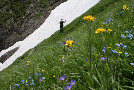 Blumenpracht im Juli