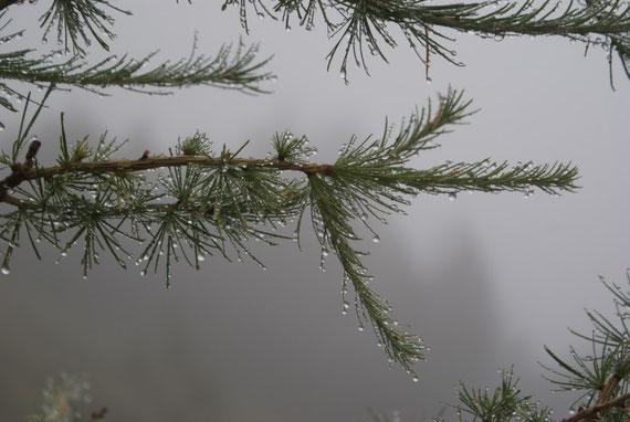 Leider war es am 12.9.2009 ausgesprochen feucht
