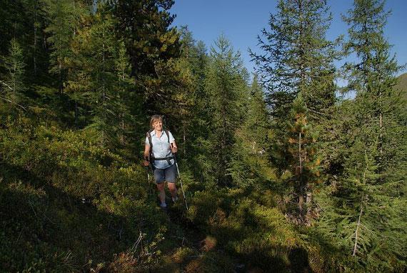Aufstieg im schönen Lärchenwald