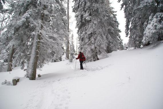Ein Märchenwald hinauf zum Ostgrat