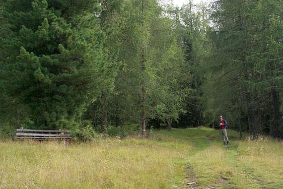 Der Forstweg zu beginn der Tour