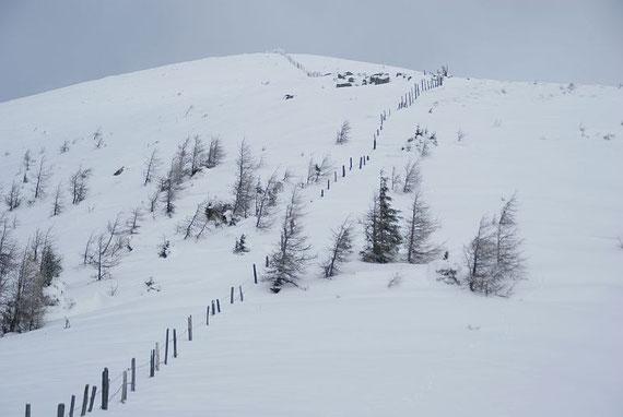Der Gipfelhang zum Vorderen Wöllaner Nock