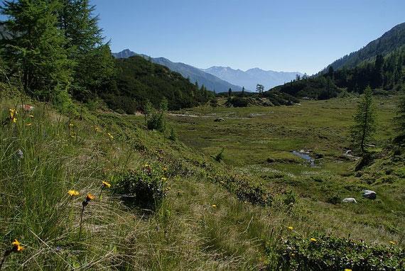 Nach vielen Kilometern Forstweg taucht man ein in die bezaubernde Kreuzeckgruppe, hier ein Hochmoor bei der Bärenkopfhütte