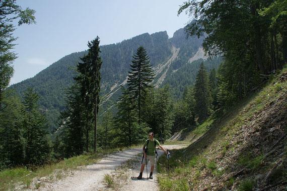 Am Forstweg der Rückanstieg mit dem Kärntner Törl im  Hintergrund
