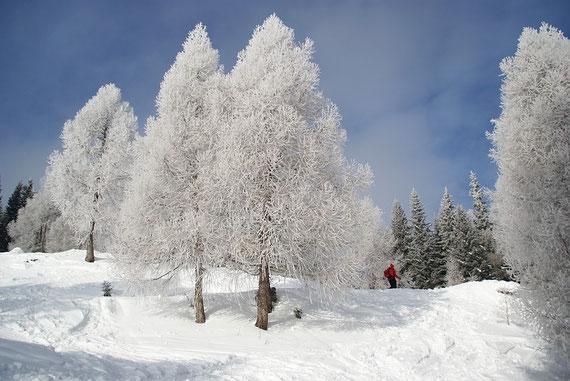 Einfach herrliche Stimmungen; der Reif auf den Bäumen glitzert im Sonnenlicht
