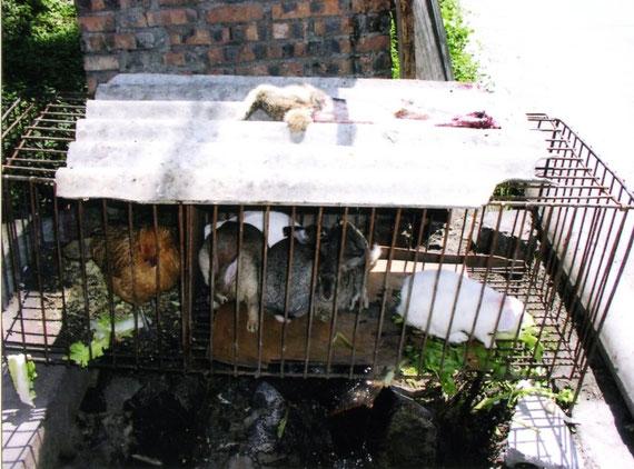 食堂裏の檻(2002年/チベットにて)