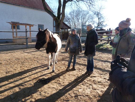 Clickertraining mit Pferd, Konditionierung