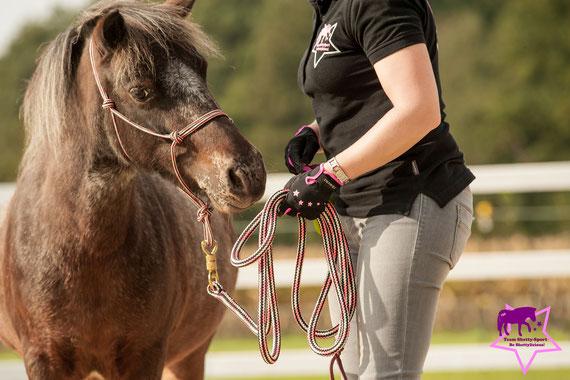 Shetty, Bodenarbeit, Horsemanship, Pferdeflüsterei