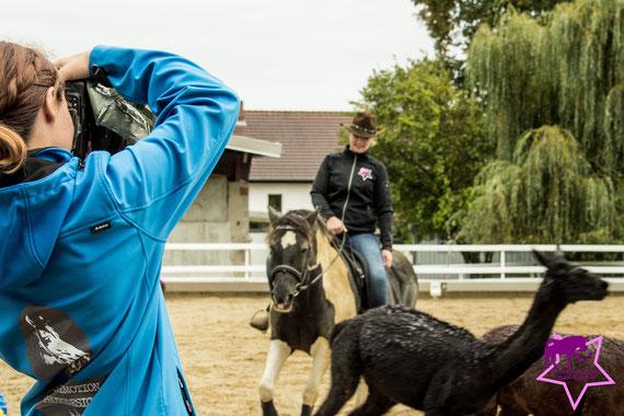 Cutting mal anders: Helene und Lady bei der Rinder....ALPAKA-Arbeit!