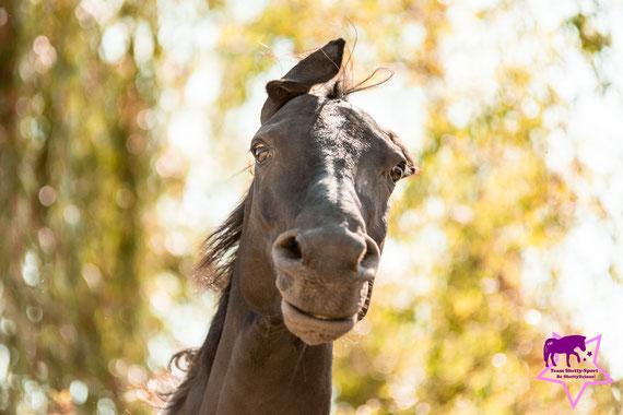 Fotoshooting mit Pferd, Kleine Reiter ganz groß - so lernen Kinder das Pfede-Abc