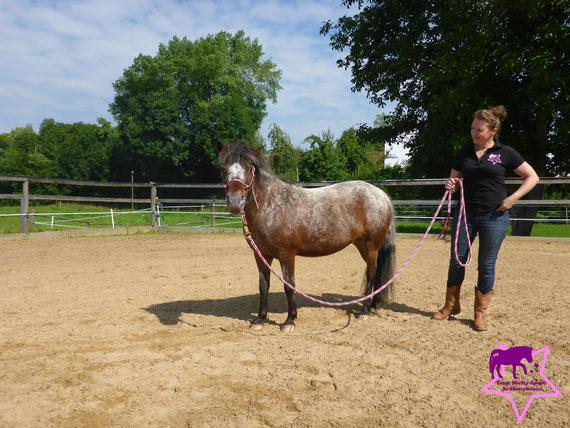 Team Shetty-Sport, Pferdeflüsterei, Knotenhalfter für Shetty, Bodenarbeit
