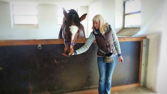 Clickertraining mit Pferd, Höflichkeit, Kreative Pferde
