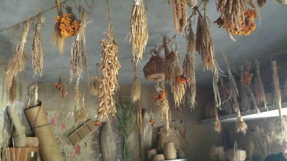 バンダナシバ農園にて原種の種を保存している様子