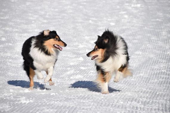 Rennen im Schnee, was ein Spaß