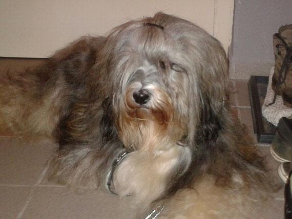 Unsere wunderschöne Tosca :-)  hier mit 4 1/2 Jahren