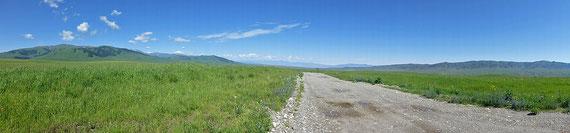 Saftiges grünes Gras: Da wäre man gerne Pferd oder Kuh (Esel eher weniger).