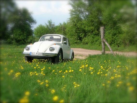 Michael - 68ger - Der einzige Käfer in Deutschland, der an einem 1. Mai zugelassen wurde