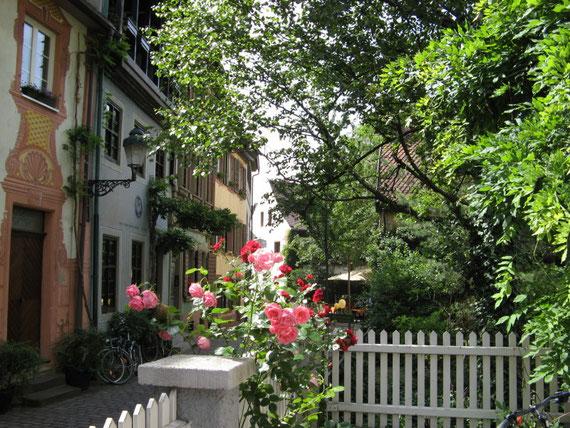 und die schönen Rosen im Garten vor seinem Büro
