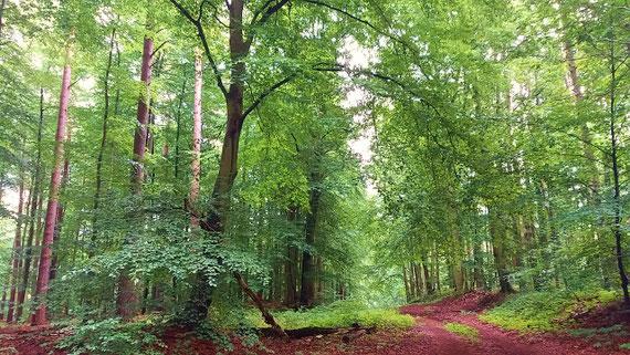 Waldspaziergänge können entgiftend und entsäuerend wirken...