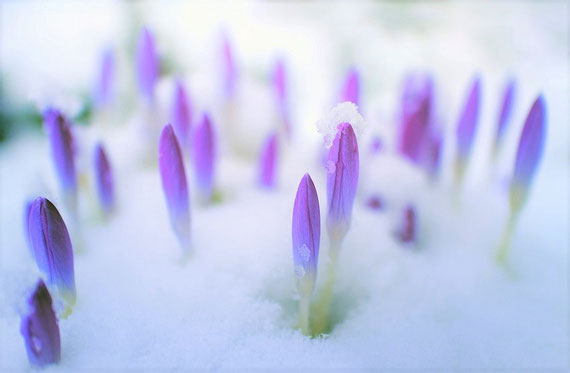 """Die Natur zeigt uns ständig Veränderungen...  (pixabay.com - vielen Dank an """"Johannes Plenio"""" :)"""