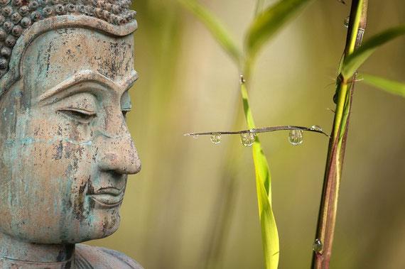 Die Weisheit in Dir muss manchmal einfach nur abgerufen werden... (Foto: pixabay.com)