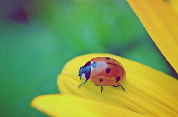 Mit Merkmalen auffallen - wie ein Marienkäfer... (Vielen Dank an Karin Schacherl Fotografie :)