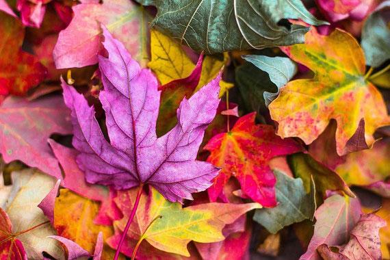Machen wir das Beste aus dem Herbst... :-)