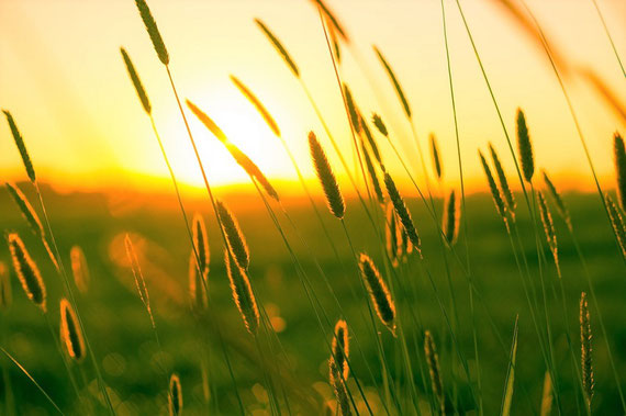 Die Natur hilft Dir, wieder in die Balance zu kommen... (Foto: pixabay.com)