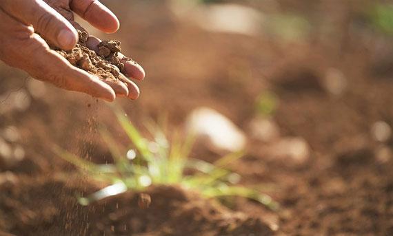 """Mutter Erde macht etwas daraus... (Foto:pixabay.com / """"7raysmarketing"""")"""