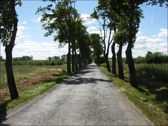 Die Strassen auf der masurischen Seenplatte in Polen sind eng und meist von Bäumen gesäumt.