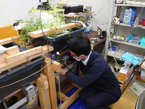 栽培・飼育しているアクアポニックス(水耕栽培+水産養殖)の調整の様子です。 クレソンとニジマスを同時に栽培・飼育しています。