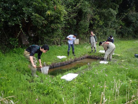 創ったビオトープでサンショウウオ・水生昆虫調査のようす