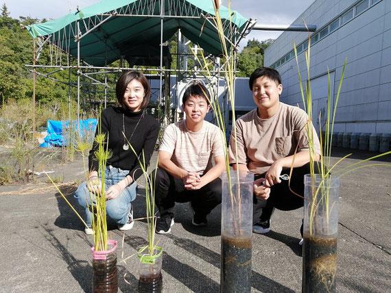 実験用の人工湿地でマンガンを除去する研究チーム(今年2020年、大学で撮影)