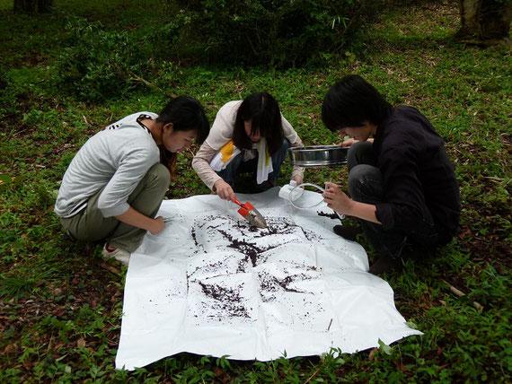 土壌動物による環境診断調査のようす