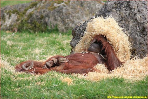 Et pour finir une bonne sieste !