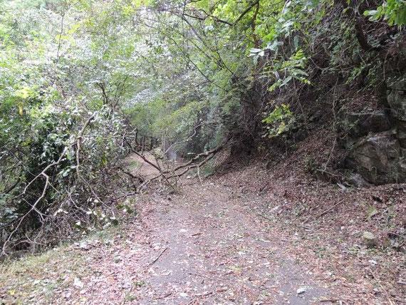 塔ノ沢線般若の滝手前の風倒木