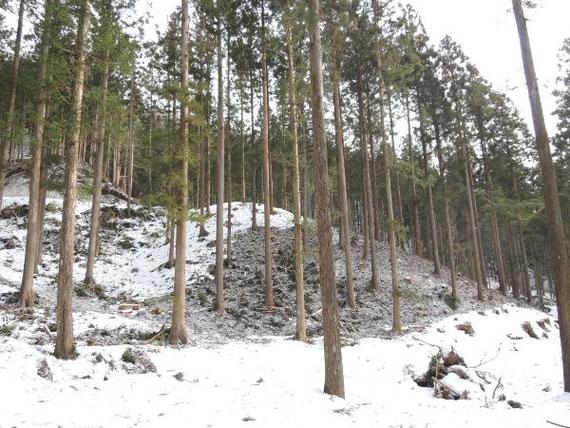 大雪前に行った間伐施業