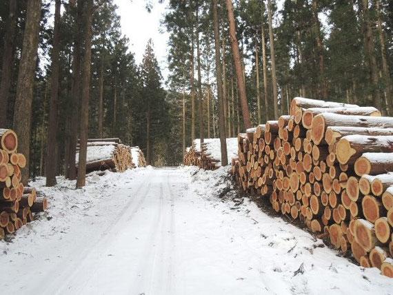 雪のため原木市場に運搬できず、積み上げてある丸太