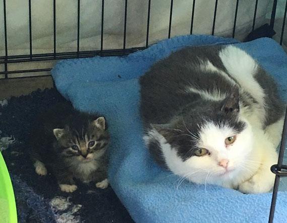 L'association a pu récupérer une chatte et son bébé
