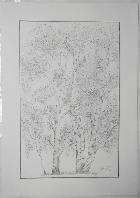 drei Birken, Bleistift auf Clairfontaine On Multitechnik Papier, 29,7 cm x 42 cm