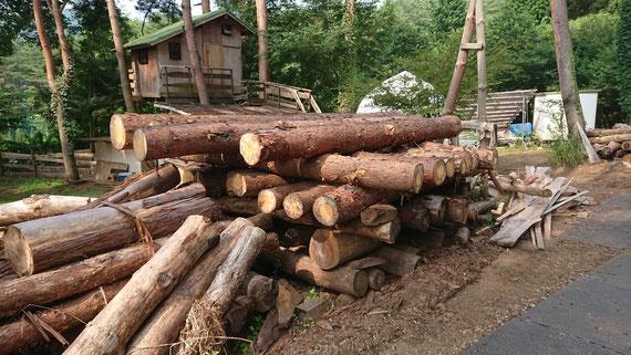 敷地内で伐採された赤松の丸太